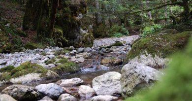 Ultra Trail Chartreuse Terminorum